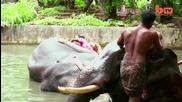 Спа за слонове - баня, масажи и глезене