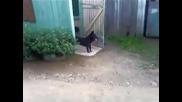 Куче портиер