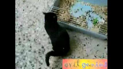Заек Показва На Котка Кой Всъщност Е Шефа!