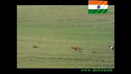 Куче срещу Заек