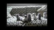 Котаци, Участват В Дансинг Старс! Хахаха!
