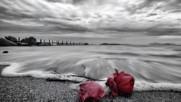 Dare- Sea of roses (превод)