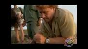 Бинди: Момичето от Джунглата - Епизод 04 – Котешки стъпки