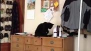 Тази котка се чуди каква мизерия да направи!