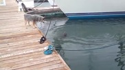 Закачлива видра във водата , разиграва куче на пристана