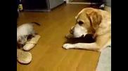 Да се чуди кучето откъде му е дошло!! :d