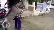 Магаре се опитва да изнасили собственика си