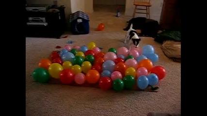 Куче срещу балони (смях)
