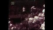 Маргрет Николова - Птиците, Пролет Моя