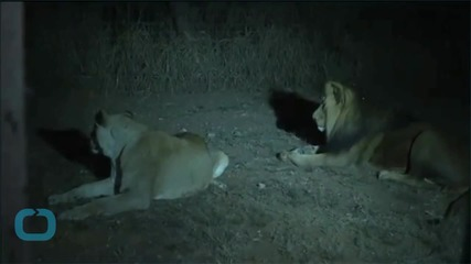 Family Remembers Woman Killed by Lion in South Africa