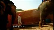 Слон се изпърява 2