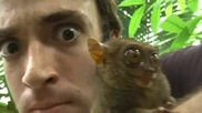 My Pet Monkey - Philippine Tarsier, Smallest in the world!