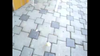 Куче и гарга си играят с топче