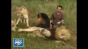 Невероятно ! Истинско Приятелство Между Човек И 38 Лъва !