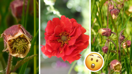 Тайната билка на баба Ванга, с която ще свалите излишните килограми