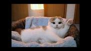 Клипче с картинки на сладки котета