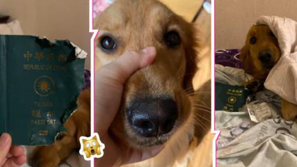 Шокираща история: Куче спаси стопанина си от китайския вирус, вижте историята на Кими