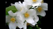 Бяла нежност ...(music Ernesto Cortazar) ... ...