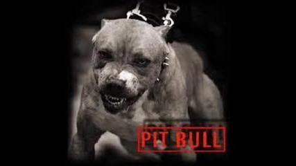 Pit Bul