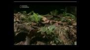 Най - Опасните Животни В Амазонка - Част 3