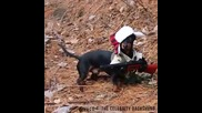 Ловно куче с уникален костюм