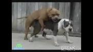 Куче Повръща По Време На Секс