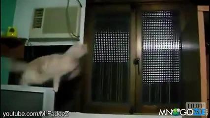 Копилация-котки които немогат да скачат (смях)