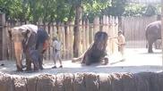Слон след баня се почиства сам с четка , смях
