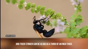 Най-големите насекоми намирани някога!