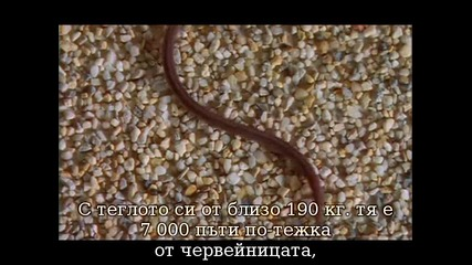 Животът на змиите част 1