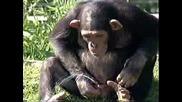 Маймунка Пишка И Си Пие Пикнята