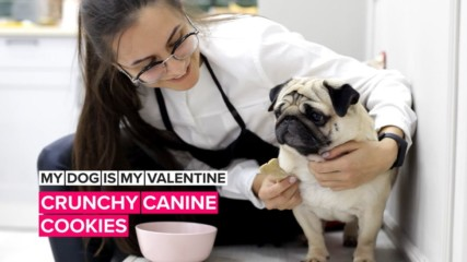 My Dog is My Valentine: Make canine cookies for your bestie