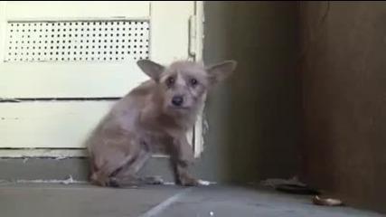 § Много Емоционално § Спасяване На Куче От Улицата