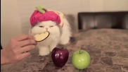 Коте си похапва ябълка