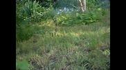 Градината при Краси.- Малката ливада.