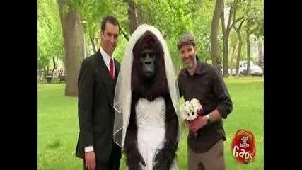 Маймунката булка :d