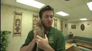 Бебе гепард