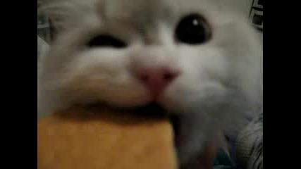 Котенце Папка