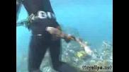 Акула Бебе Хапе Водoлаз По Дупето !! Смях