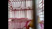 kanar