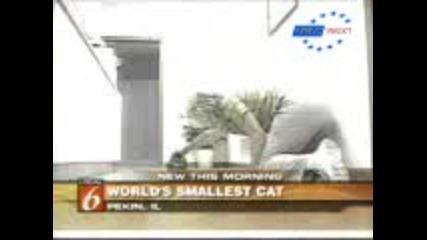 Световен Рекорд - Най-малката възрастна котка