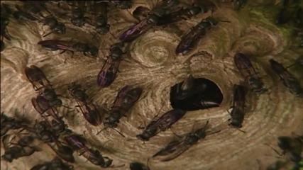 Паразитни оси и отровните мравки..