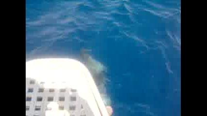 Делфини В Егейско Море