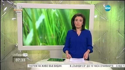 Митинг в подкрепа на Надежда Савченко в столицата