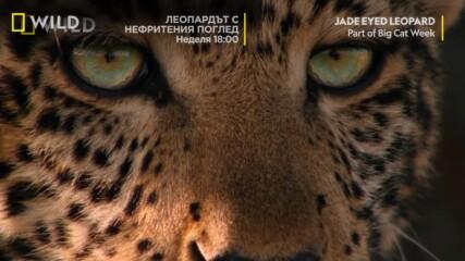 Тото открива света | Месец на Големите Котки | NG Wild Bulgaria