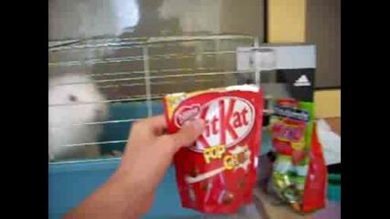 Зайче иска Kit Kat Pop Choc :d
