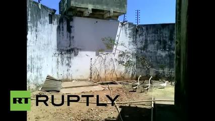 Бразилски затвор използва гъски за пазачи