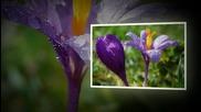 Пролетна красота - снимки на Ирина Скендерска авторски Koinova