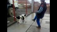 Куче пазач на 4 месеца ! Алабай