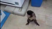 Маймуна си поръчва газирана напитка от апарат...